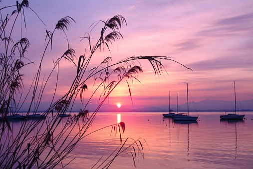 Japanese pampas grass「Lake Biwa and yachts, Shiga Prefecture, Honshu, Japan」:スマホ壁紙(1)