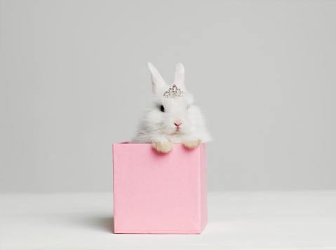 Tiara「White bunny rabbit wearing tiara sitting in pink box, studio shot」:スマホ壁紙(13)