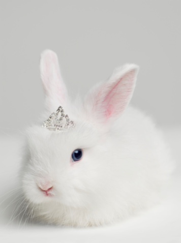 Fairy Tale「White bunny rabbit wearing tiara, close up, studio shot」:スマホ壁紙(9)