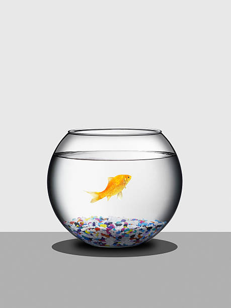 Goldfish in fishbowl:スマホ壁紙(壁紙.com)