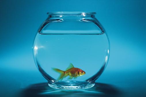 Fishbowl「Goldfish in fishbowl」:スマホ壁紙(16)