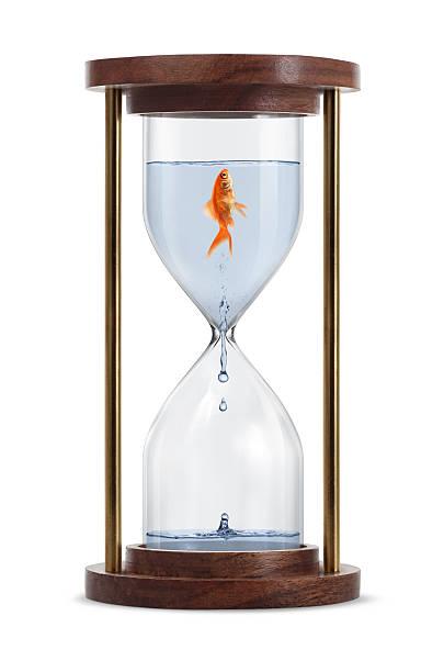 Goldfish in Hourglass:スマホ壁紙(壁紙.com)