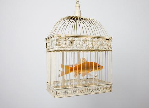 Miami Beach「Goldfish in a bird cage」:スマホ壁紙(12)