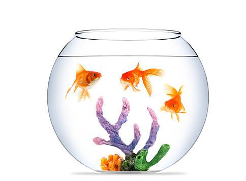 Goldfish「金魚の水族館」:スマホ壁紙(14)