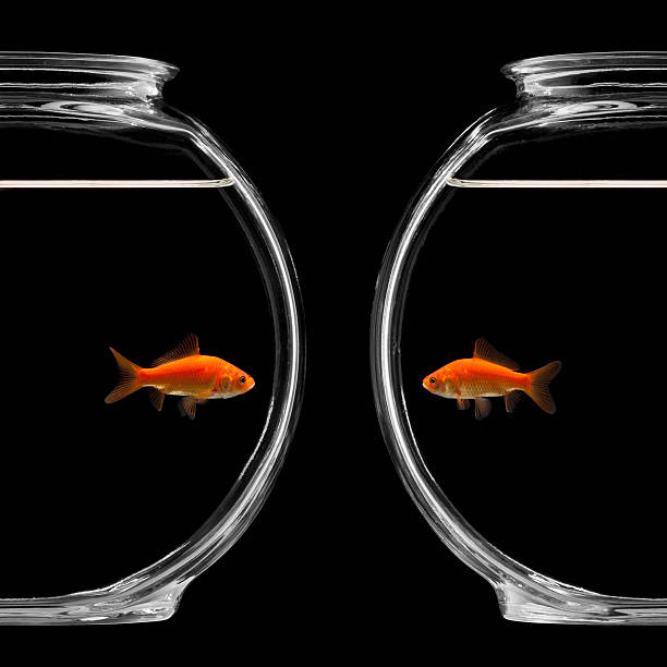 Goldfish in bowl:スマホ壁紙(壁紙.com)