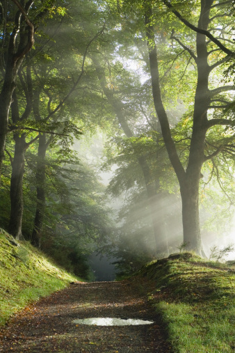 Horror「Track through misty woods」:スマホ壁紙(10)