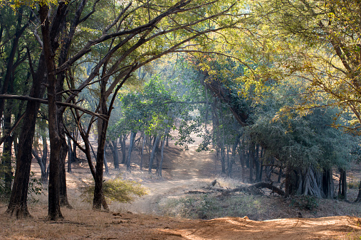 Rajasthan「Track through Bengal tiger forest」:スマホ壁紙(17)
