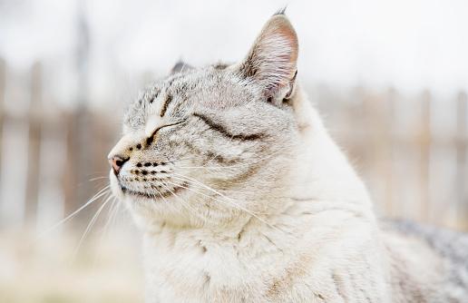 猫「USA, Colorado, Portrait of grey cat with closed eyes」:スマホ壁紙(2)