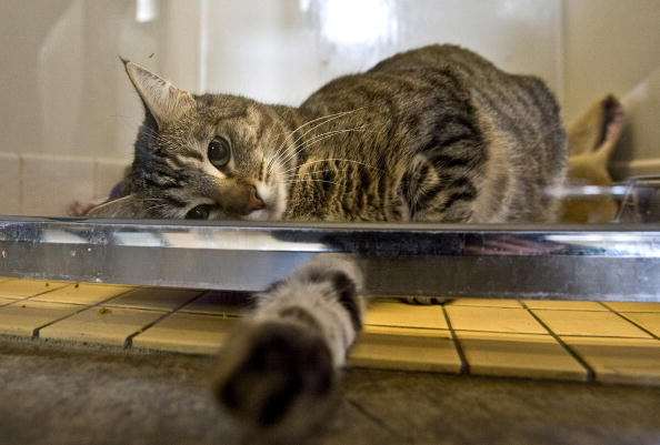 猫「Household Pets Become Latest Victims Of Foreclosure Crisis」:写真・画像(11)[壁紙.com]