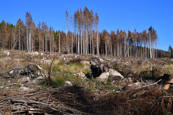 Plant Bark「As Summer Temperatures Rise Bark Beetle Infestations Intensify」:写真・画像(5)[壁紙.com]