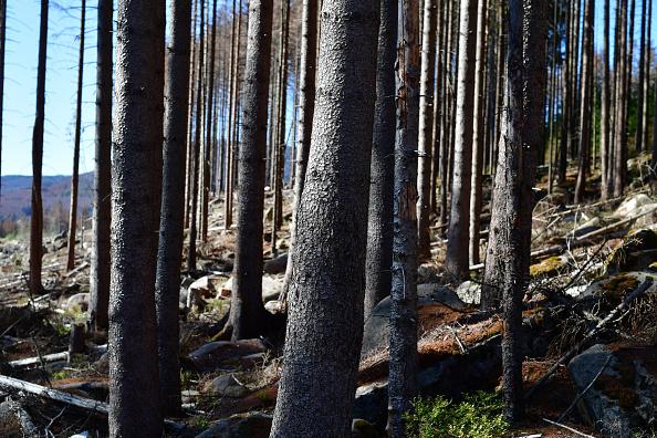 Plant Bark「As Summer Temperatures Rise Bark Beetle Infestations Intensify」:写真・画像(4)[壁紙.com]