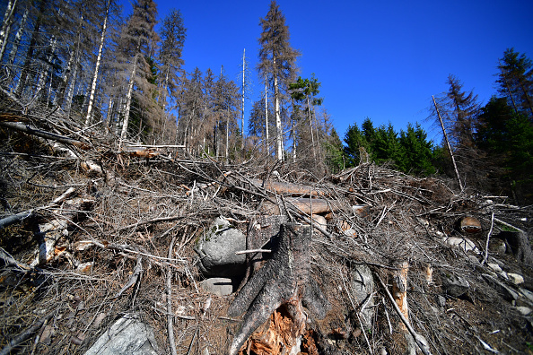 Plant Bark「As Summer Temperatures Rise Bark Beetle Infestations Intensify」:写真・画像(3)[壁紙.com]