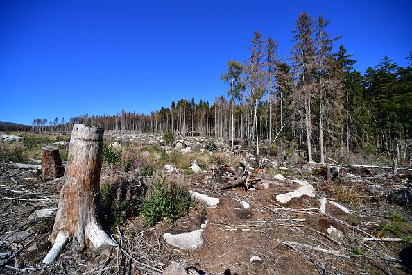 Plant Bark「As Summer Temperatures Rise Bark Beetle Infestations Intensify」:写真・画像(9)[壁紙.com]
