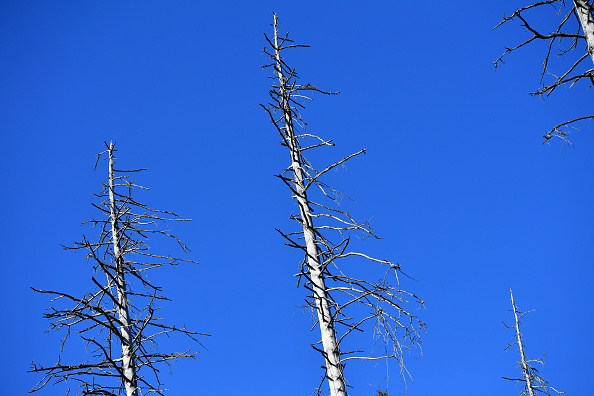 Plant Bark「As Summer Temperatures Rise Bark Beetle Infestations Intensify」:写真・画像(6)[壁紙.com]