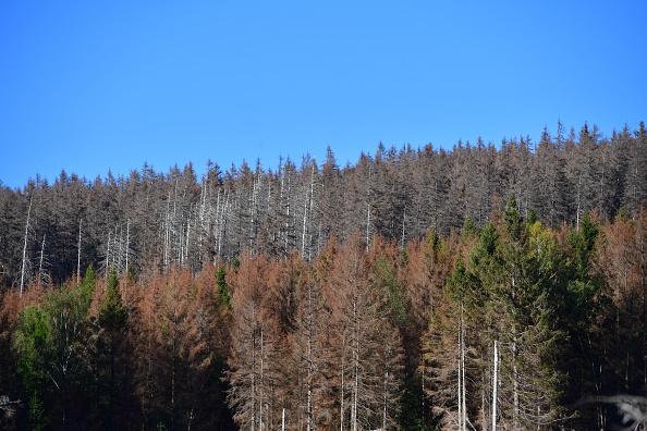 Plant Bark「As Summer Temperatures Rise Bark Beetle Infestations Intensify」:写真・画像(1)[壁紙.com]