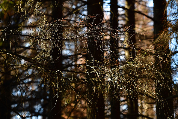 Plant Bark「As Summer Temperatures Rise Bark Beetle Infestations Intensify」:写真・画像(2)[壁紙.com]