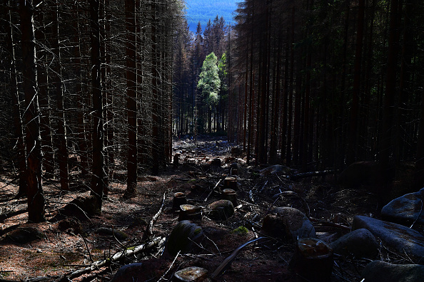 Plant Bark「As Summer Temperatures Rise Bark Beetle Infestations Intensify」:写真・画像(11)[壁紙.com]
