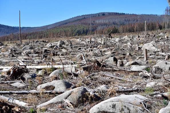 Plant Bark「As Summer Temperatures Rise Bark Beetle Infestations Intensify」:写真・画像(14)[壁紙.com]