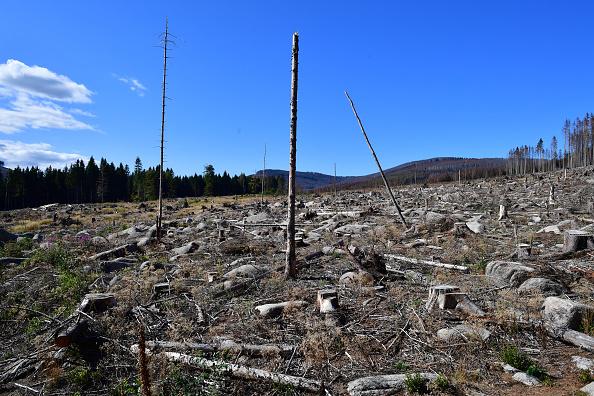 Plant Bark「As Summer Temperatures Rise Bark Beetle Infestations Intensify」:写真・画像(7)[壁紙.com]
