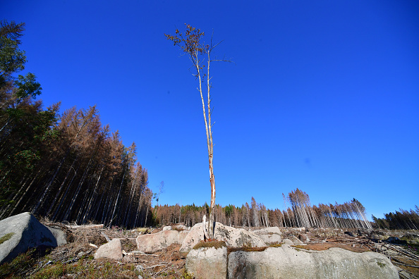 Plant Bark「As Summer Temperatures Rise Bark Beetle Infestations Intensify」:写真・画像(13)[壁紙.com]