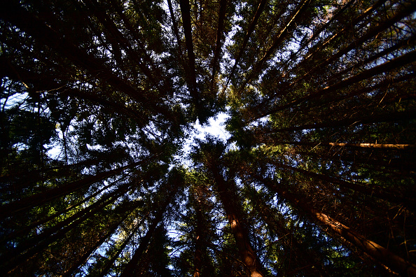 Plant Bark「As Summer Temperatures Rise Bark Beetle Infestations Intensify」:写真・画像(15)[壁紙.com]