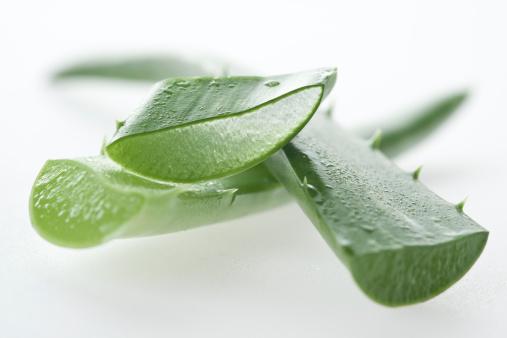 Healing「Aloe vera macro」:スマホ壁紙(8)