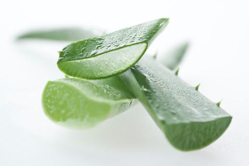 Aloe「Aloe vera macro」:スマホ壁紙(9)