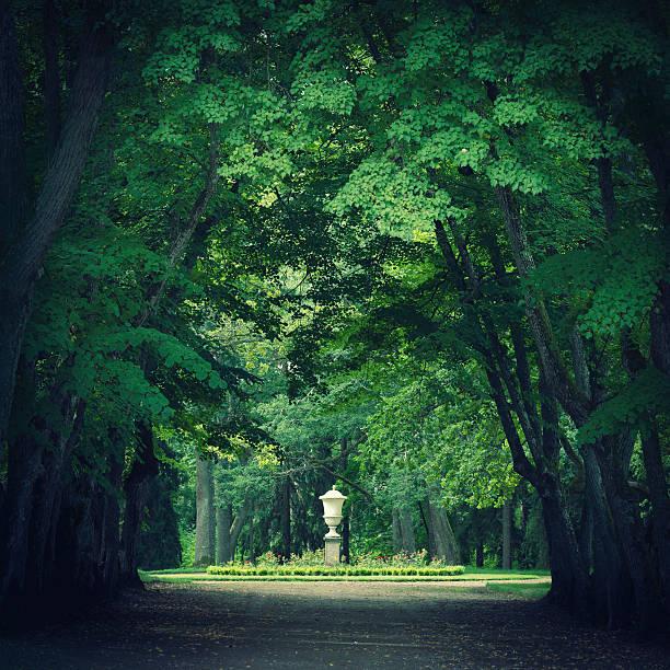 Magical park with green trees:スマホ壁紙(壁紙.com)