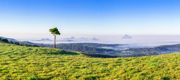 Single Tree「Glasshouse Mountains,Sunshine Coast Hinterlands,Queensland,Australia」:スマホ壁紙(19)