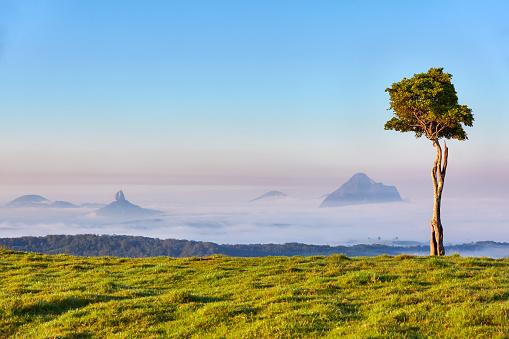 Single Tree「Glasshouse Mountains,Sunshine Coast Hinterlands,Queensland,Australia」:スマホ壁紙(17)
