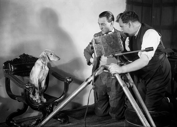 Working Animal「Auditioning Dog」:写真・画像(18)[壁紙.com]