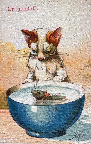 子猫「Like A Cat With The Mouse」:写真・画像(8)[壁紙.com]