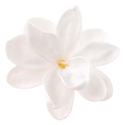 Wildflower「Lilac」:スマホ壁紙(16)