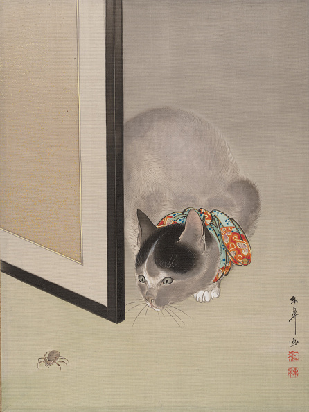 Animals Hunting「Cat Watching A Spider」:写真・画像(15)[壁紙.com]