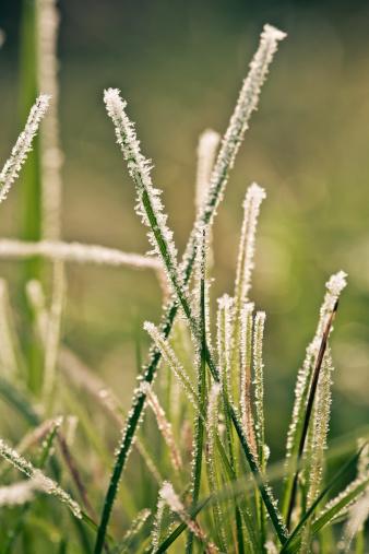氷晶「Frost-covered blades of grass, close-up」:スマホ壁紙(19)