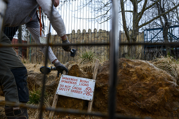 New「Finishing Touches Are Applied To The New Lion's Enclosure At London Zoo」:写真・画像(15)[壁紙.com]