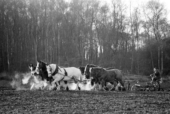 Tom Stoddart Archive「Farmers Ploughing With Shire Horses」:写真・画像(16)[壁紙.com]