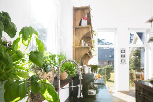 Dawn「Basil in kitchen」:スマホ壁紙(6)