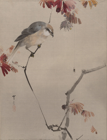 Animals Hunting「Bird On Branch Watching Spider」:写真・画像(19)[壁紙.com]
