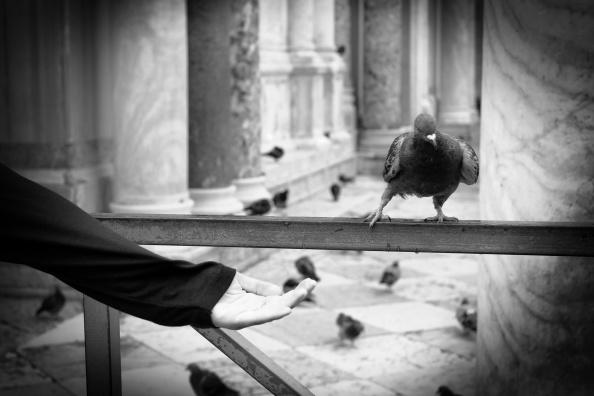 San Marco Quarter「71st Venice Film Festival - Alternative Views」:写真・画像(14)[壁紙.com]