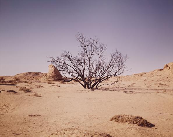 Desert Area「Snake In Desert Tree」:写真・画像(0)[壁紙.com]