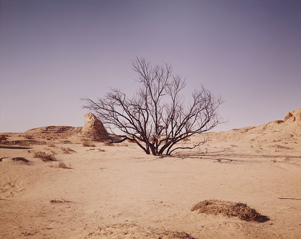 Desert「Snake In Desert Tree」:写真・画像(1)[壁紙.com]