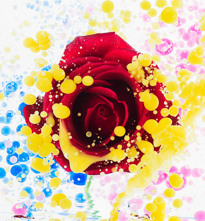 Vibrant Color「Floating flower and color oil」:スマホ壁紙(10)