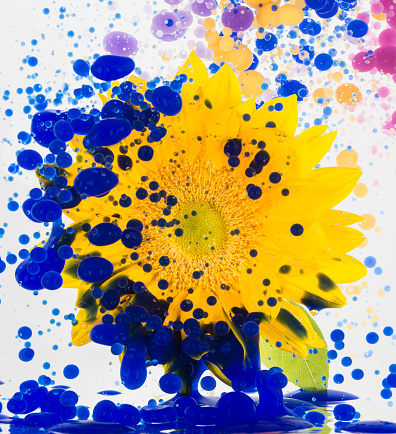 Creativity「Floating flower and color oil」:スマホ壁紙(14)