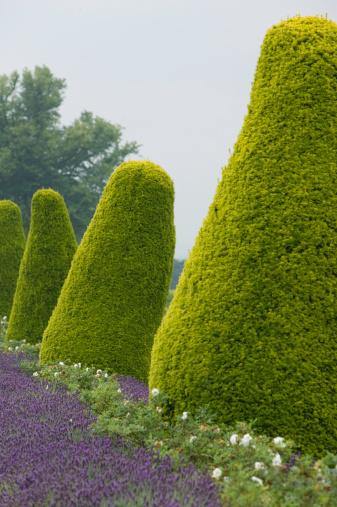 Formal Garden「Row of ornamental bushes growing in formal garden」:スマホ壁紙(16)