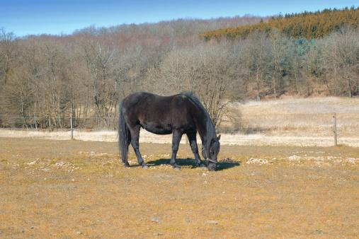 Stallion「Horse grazing alone」:スマホ壁紙(10)