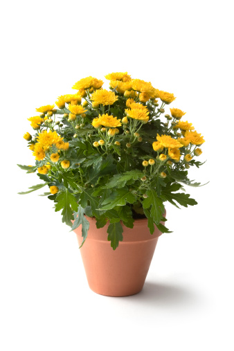 Flower Pot「Gardening: Flowers」:スマホ壁紙(7)