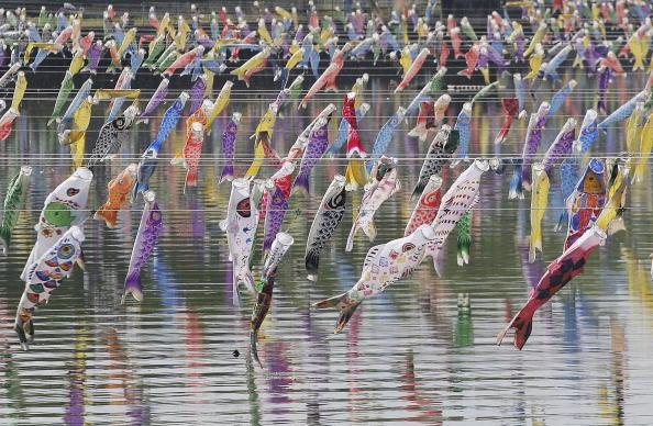 こいのぼり「Carp streamers are hung over the river」:写真・画像(19)[壁紙.com]