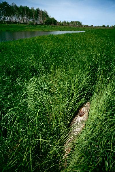 Grass「Fishing For Sturgeon」:写真・画像(16)[壁紙.com]