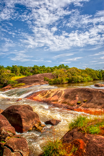 Amazon Rainforest「Rio in Amazon area」:スマホ壁紙(14)